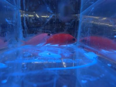 海水魚 530