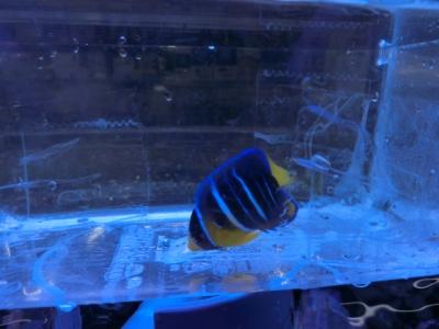 海水魚 532
