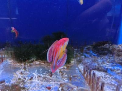 海水魚 534