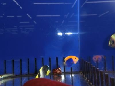 海水魚 542