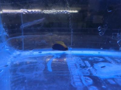海水魚 538