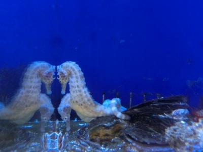 海水魚 543