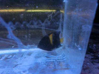 海水魚 551
