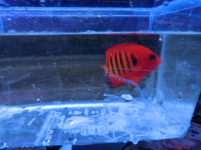 海水魚 547