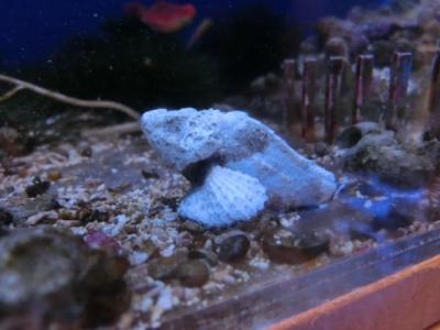 海水魚 548