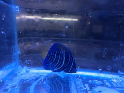 海水魚 549