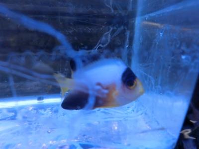 海水魚 550