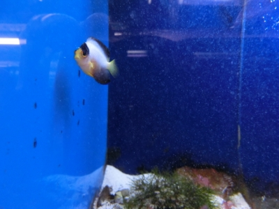 海水魚 555