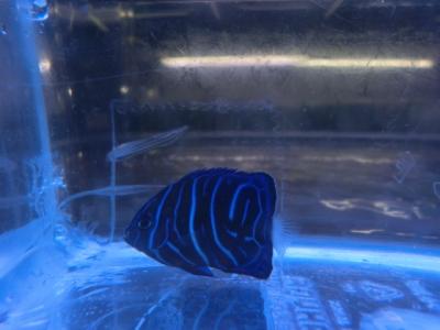 海水魚 552
