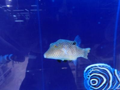 海水魚 553