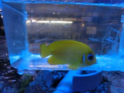 海水魚 554