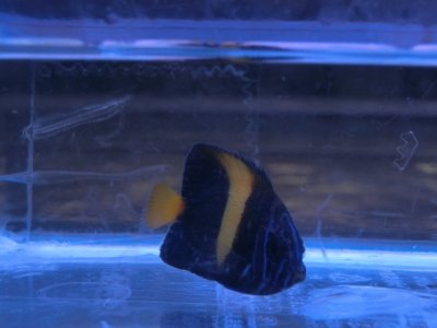 海水魚 560