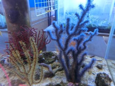 海水魚 565