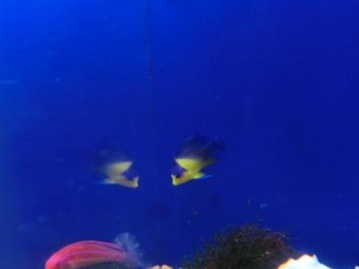 海水魚 568
