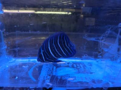 海水魚 573