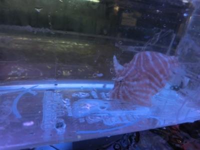 海水魚 569