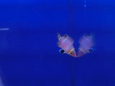 海水魚 578