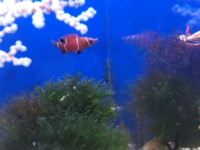 海水魚 580