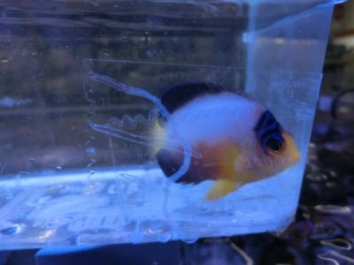 海水魚 581