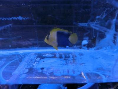 海水魚 582