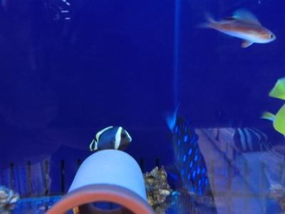 海水魚 586