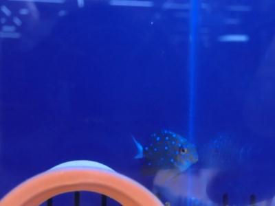 海水魚 585
