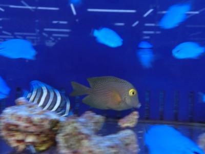 海水魚 587