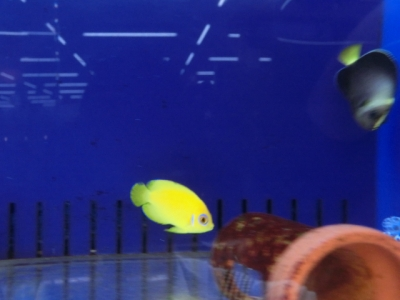 海水魚 589