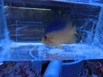 海水魚 590