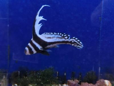 海水魚 596