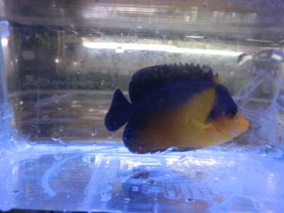 海水魚 599