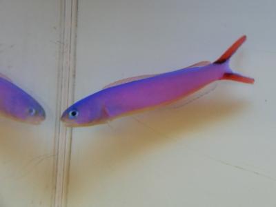 海水魚 600
