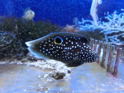 海水魚 608