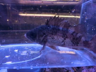海水魚 612