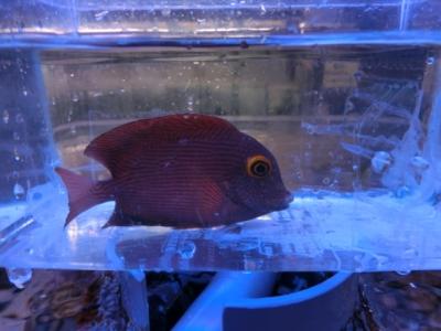 海水魚 613