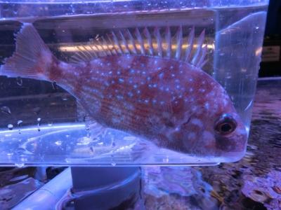 海水魚 614