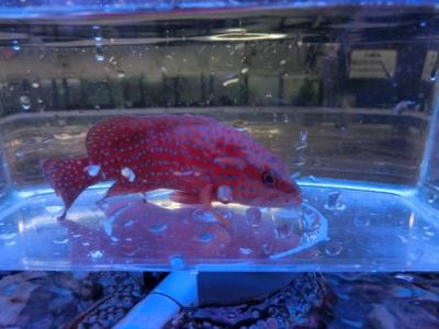 海水魚 617