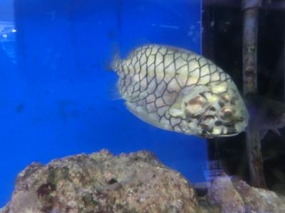 海水魚 620