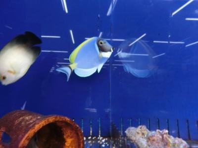 海水魚 622