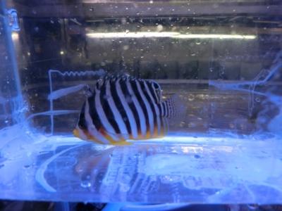海水魚 623