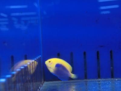 海水魚 639