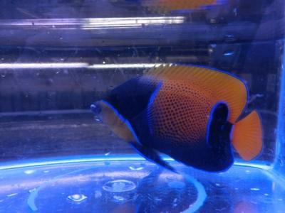 海水魚 635