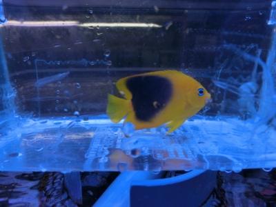海水魚 636