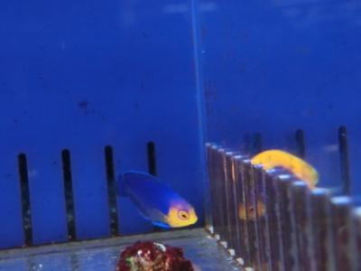 海水魚 637