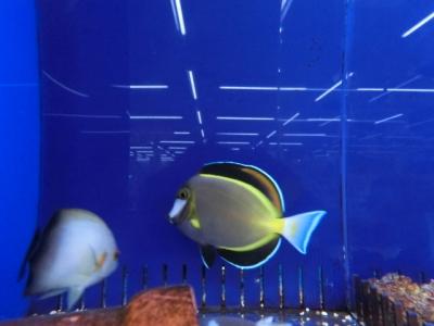 海水魚 641