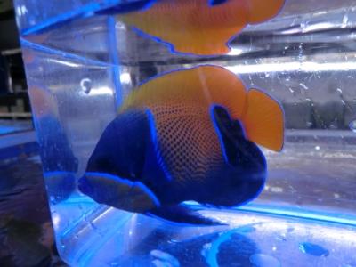 海水魚 646