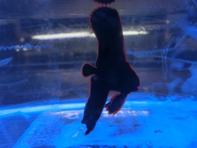 海水魚 648