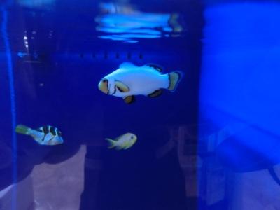 海水魚 726