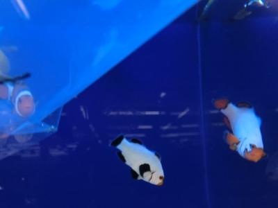 海水魚 723