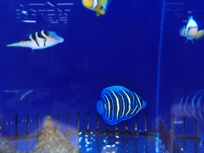 海水魚 724